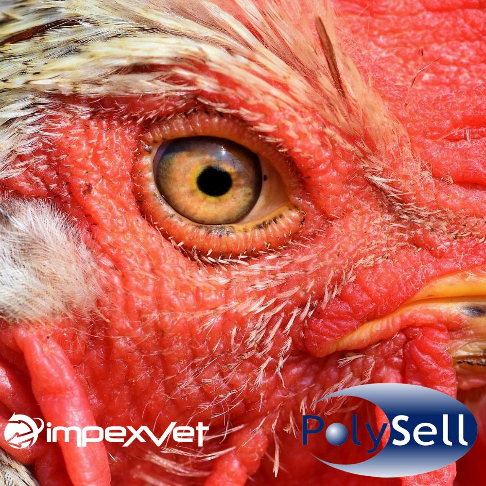 Soluciones innovadoras que ofrece Impexvet contra los desafíos virales (Influenza y Newcastle) en la industria avícola.